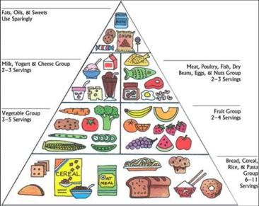 food guide pyramic
